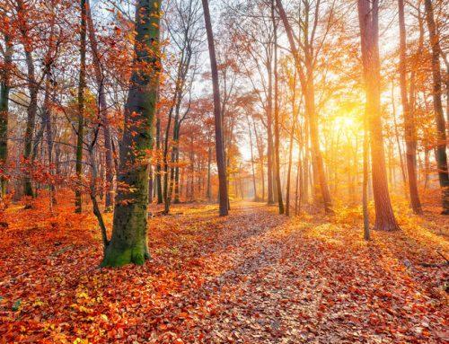 Geniet optimaal van de herfst met VoetreflexPlus™